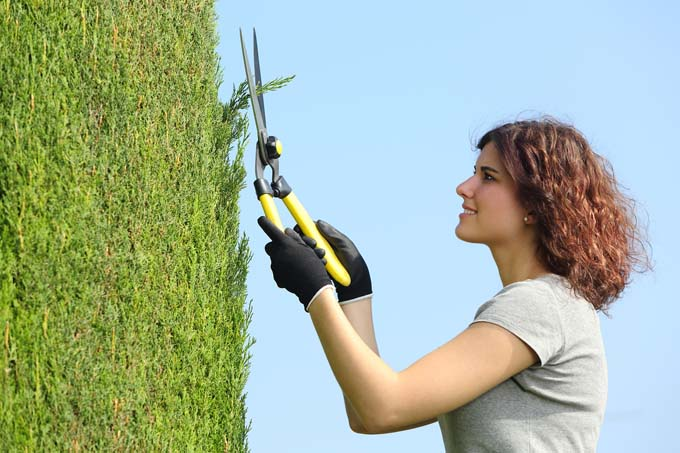 Pruning Cypress | GardenersPath.com