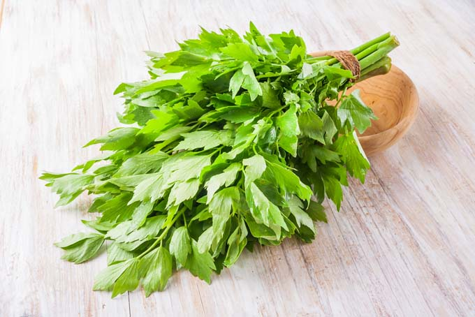 Bunch of Lovage on Table | GardenersPath.com