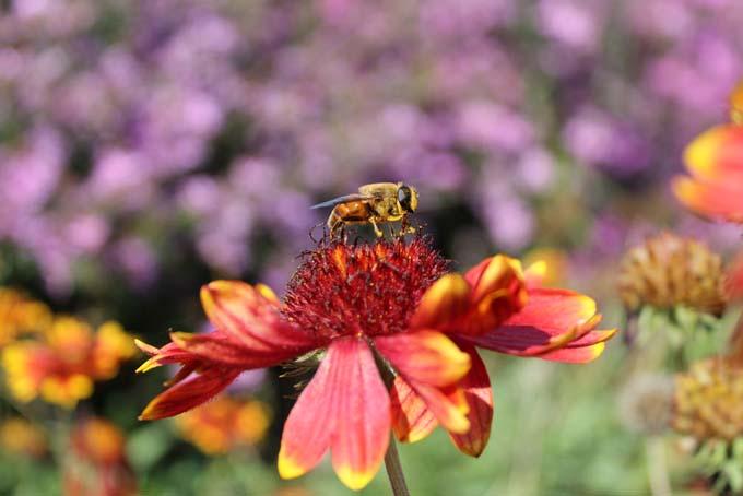 Annuals vs. Perennials | GardenersPath.com