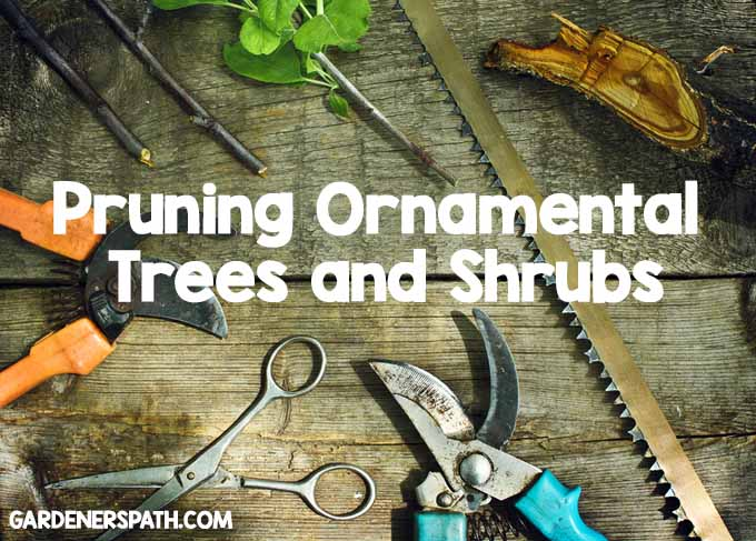 Pruning Ornamental Trees and Shrubs| Foodal.com