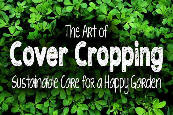 Art of Cover Cropping | Gardener