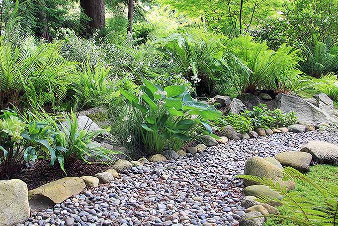 Xeriscaping in All Regions for Efficiency and Aesthetics | GardenersPath.com
