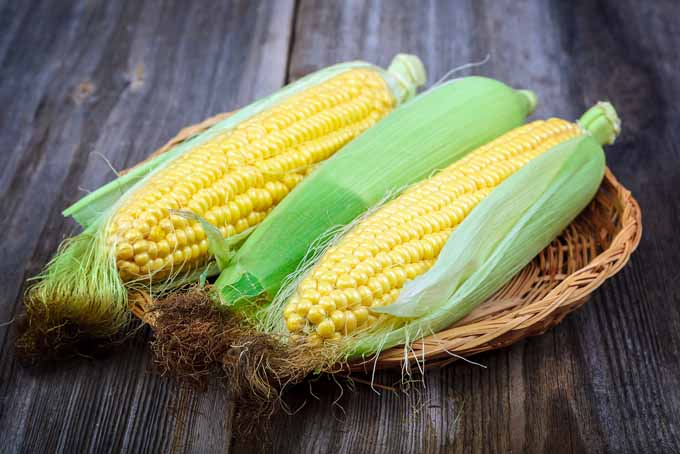 Growing Delicious Sweet Corn | GardenersPath.com
