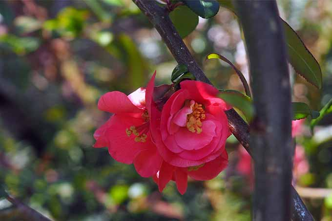 Learn which flowers and shrubs give your garden a heavenly scent | GardenersPath.com