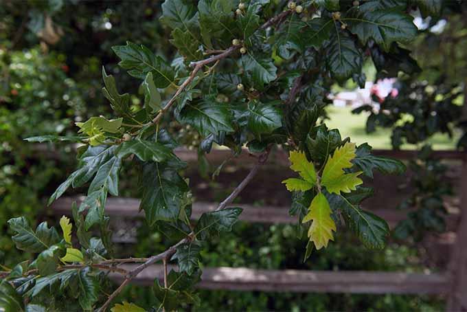 Developing a new tree species. | GardenersPath.com