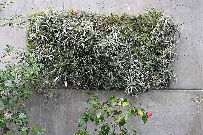 Tillandsia Wall Sculpture | GardenersPath.com