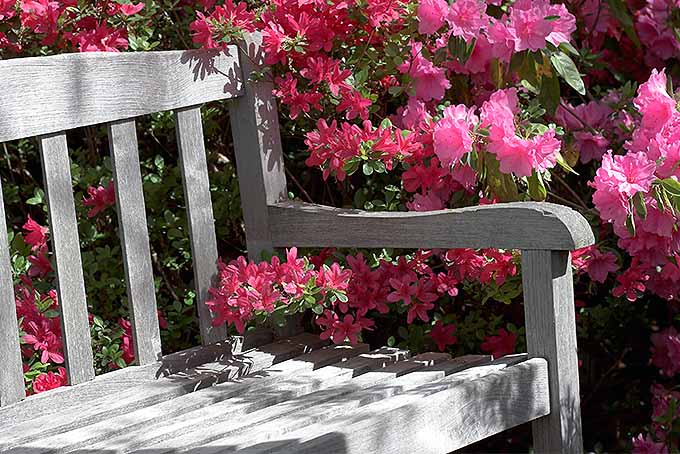 Best Benches for Enjoying a Fresh Garden Review | GardenersPath.com