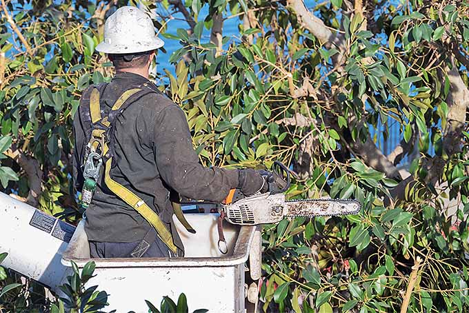 Hire a Certified Arborist to Deal with Dead Branches | GardenersPath.com