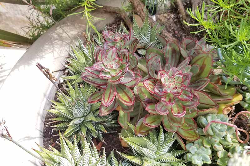 A large white planter is filled with various types of succulents.