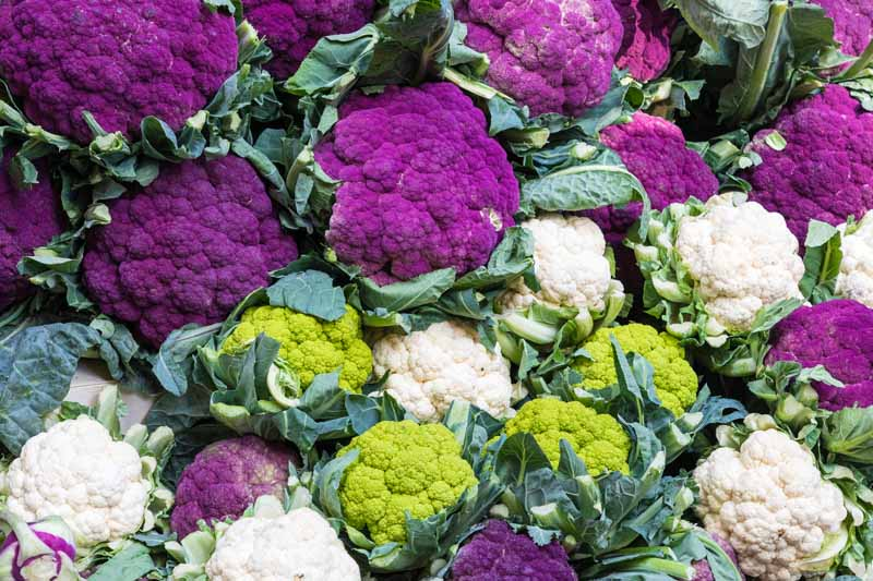 Green, purple, and white cauliflower heads on display.