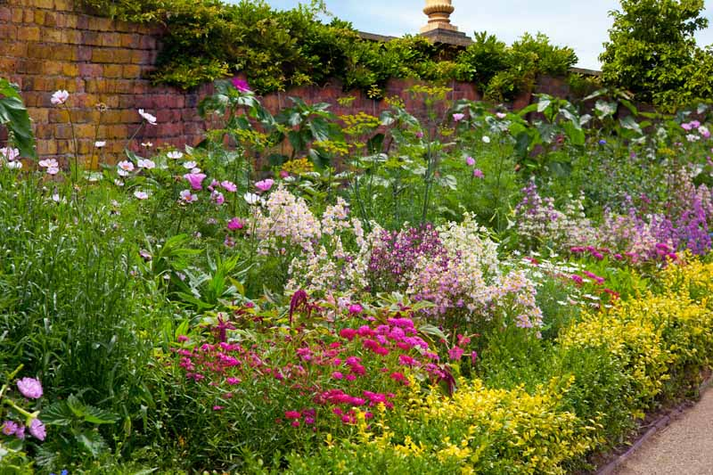 A colorful perennial flower bed in bloom in a cottage-style walled garden.