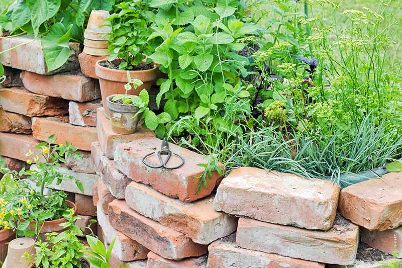 A loose brick retaining wall without mortar, with herbs and potted plants growing inside, with several terra cotta pots and a pair of secateurs on top.