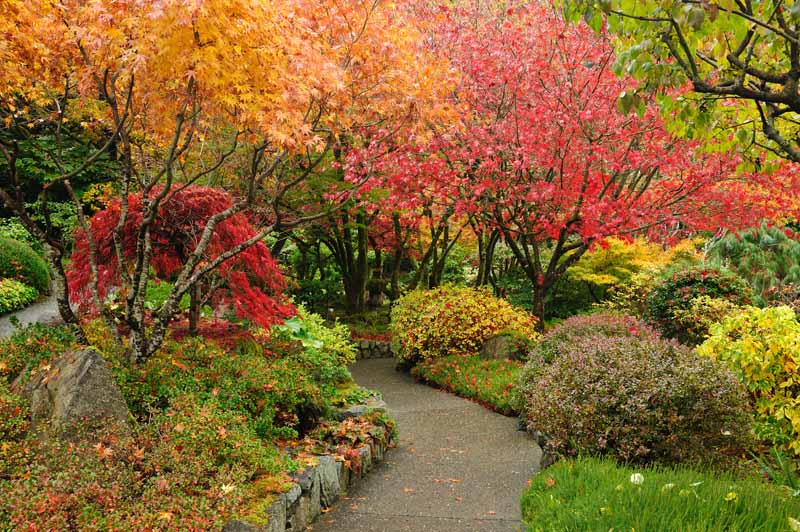 A Japanese style garden in the autumn showing off bright orange, red, and yellow fall colors.