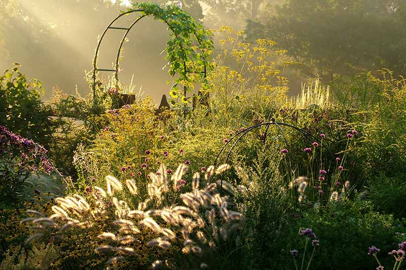 Autumnal scene in low sunshine. A metal arbor with a green vine is surrounded by ornamental grasses and shrubs, in the background are trees in soft focus.