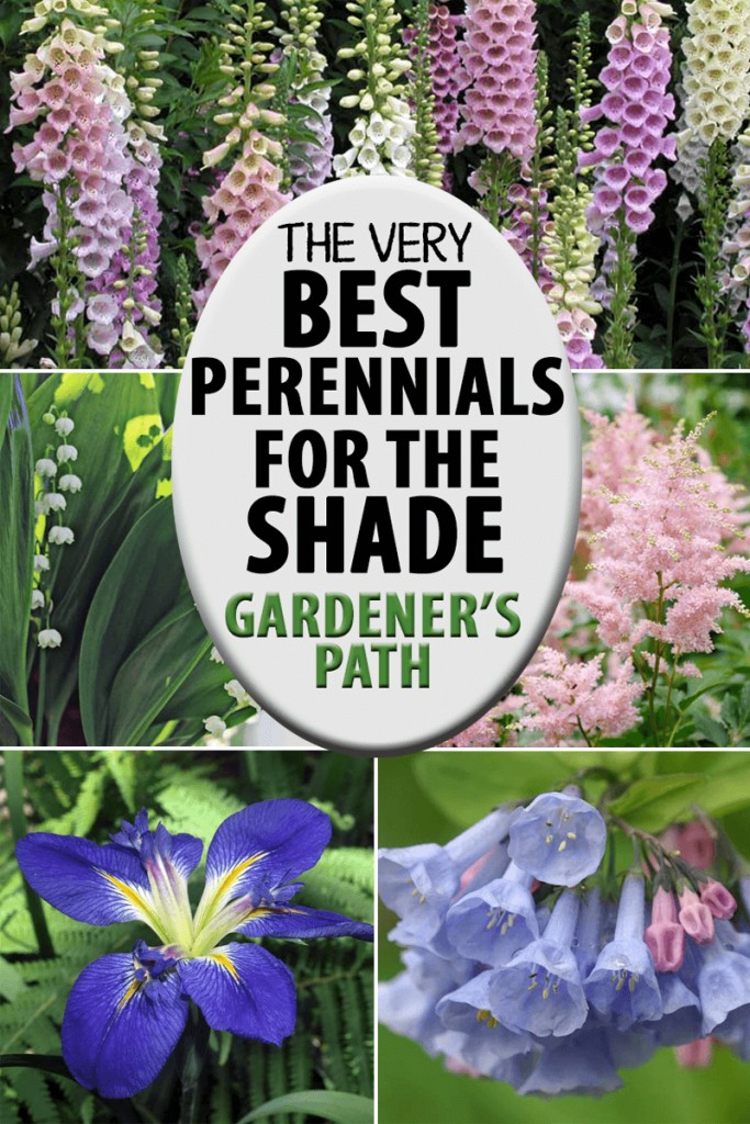 A collage of photos showing different types of shade friendly flowering perennials.