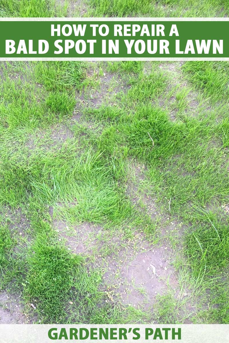 A grass lawn with bald patches.
