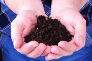 Compost Tea: It Feeds and Protects Your Plants