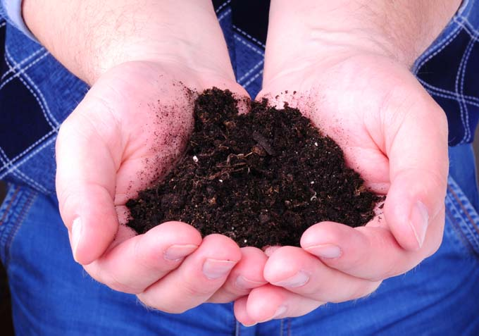 Cupped human hands hold compost.