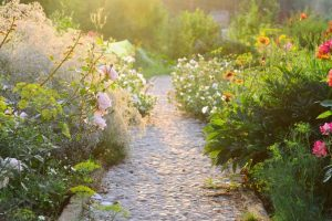 Tips to Keep Your Late Summer Garden Going Strong
