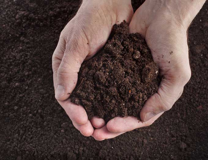 A pair of human hands cups rich compost that is being added to the soil