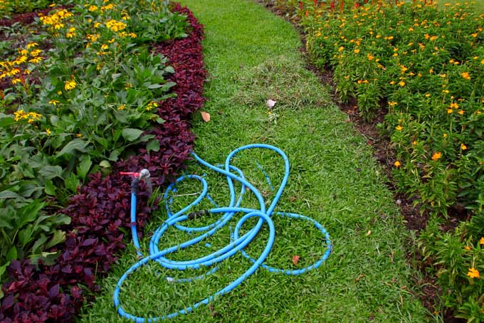Garden Hose left in pathway