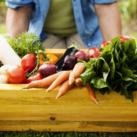 Getting Started with Organic Gardening | GardenersPath.com