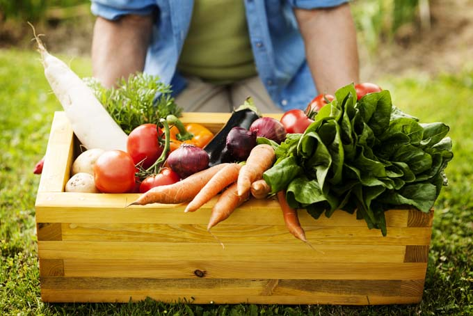 Person kneels behind a wooden box containing organically grown vegetables