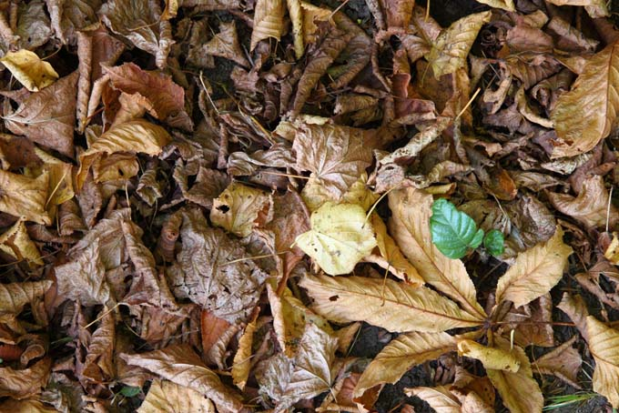 fall leaves and leaf mold on a forrest floor