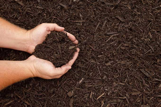 Shredded bark and wood mulch being cupped by pair of human hands