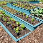 A series of tiered raised beds in the garden with copius amounts of mulch