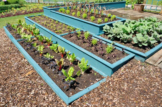 A series of tiered raised beds in the garden, with copious amounts of mulch surrounding planted crops.