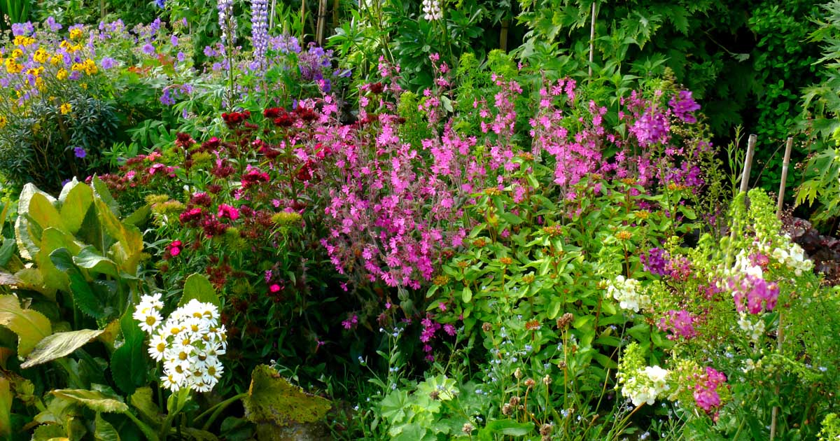Design An Old Fashioned Cottage Garden, How To Plan A Cottage Garden From Scratch