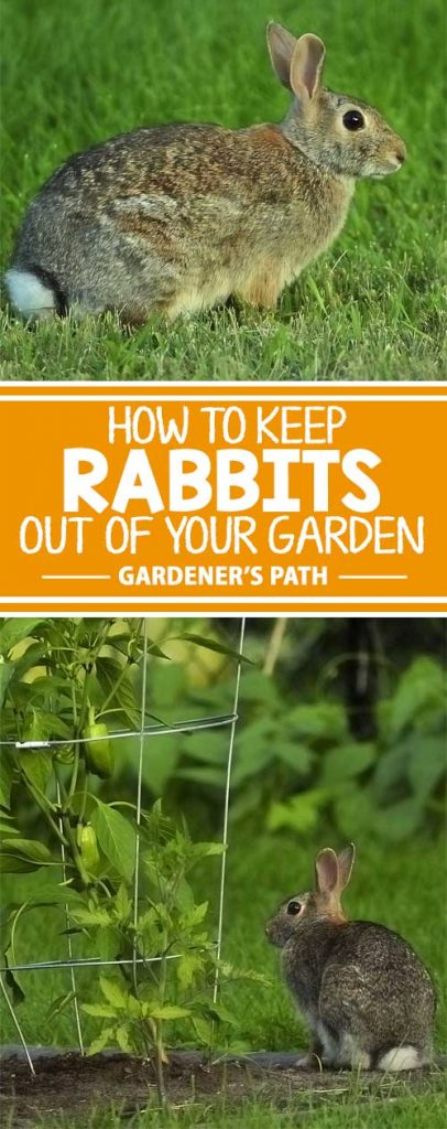 everybody loves the easter bunny right but its not quite as cute when rabbits - How To Keep Rabbits Out Of Garden