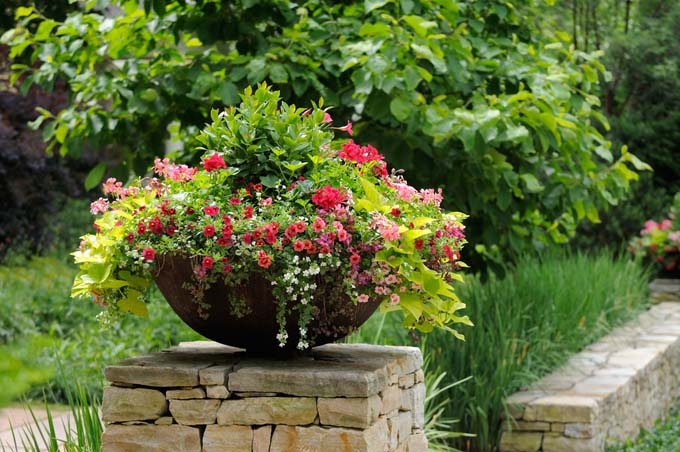 Plant container on stone wall featuring geranium, million bells, and sweet potatoe vine