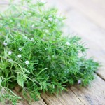 Leaves and stalks of the the summer savory herb laid out on rustic wooden tablen; shallow depth of focus