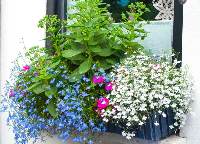 a window box with a spray of colors from different types of flowers and herbs