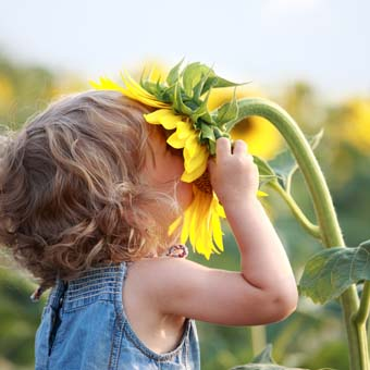 Little boy shoves his entire face into a giant sunflower