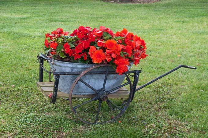 An old antique garden cart serves as a unique garden planter