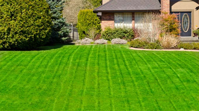 A green and lucious lawn in front of a newer brick two story house - The Best Tips For A Luscious, Healthy Lawn Gardener's Path