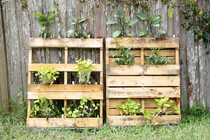 two pallets being used to form a vertcal gard with soil and plantersbeing placed between boards