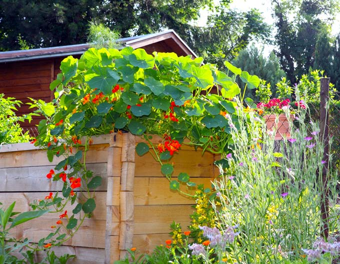 This raised bed in a cottage garden demonstrates gardening in small spaces