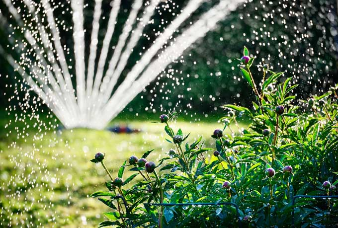 Garden sprinkler spays water over lawn and border plants