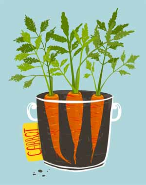Carrots make great container plants   Gardenerspath.com