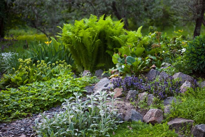 Ferns and other shady perenials in a japanese style rock garden | Gardener's Path