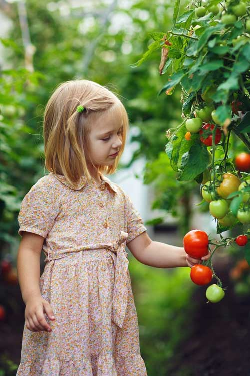 Get Started With Easy to Grow Tomato Plants | Gardenerspath.com