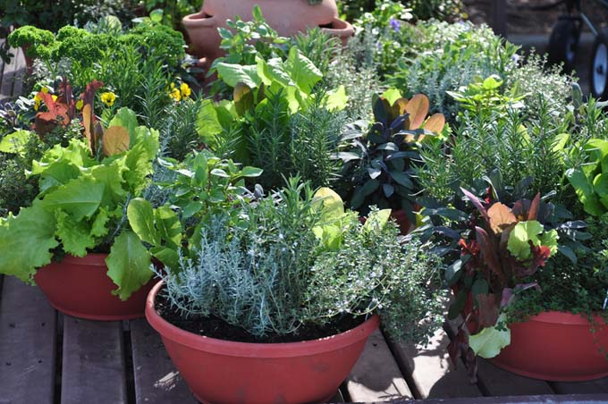 A container garden on a deck, comprised of shallow terra cotta containers filled with vegetables, flowers, and herbs.