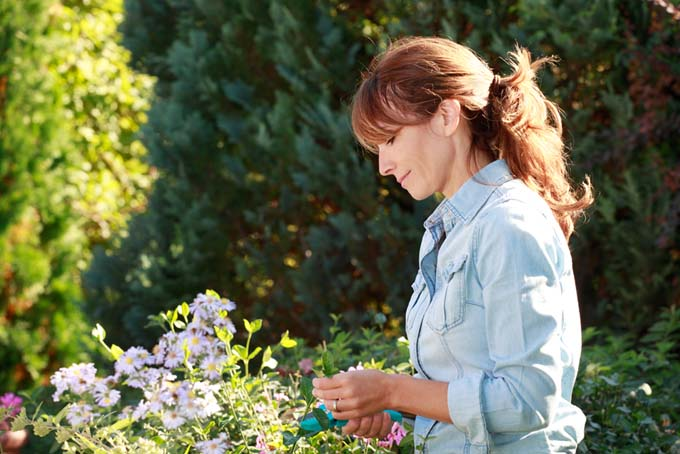 A woman in the cutting garden, selecting flowers to make a bouquet.
