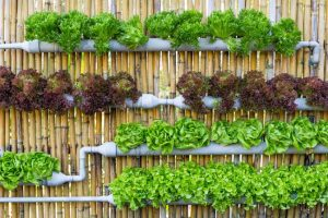 Vertical Gardening Works for Everyone
