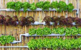 How to Create a Vertical Garden | GardenersPath.com