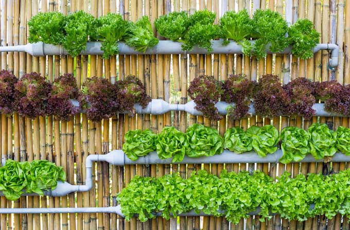 How to Create a Vertical Garden | http://gardenerspath.com/how-to/design/vertical-gardening-works-everyone/